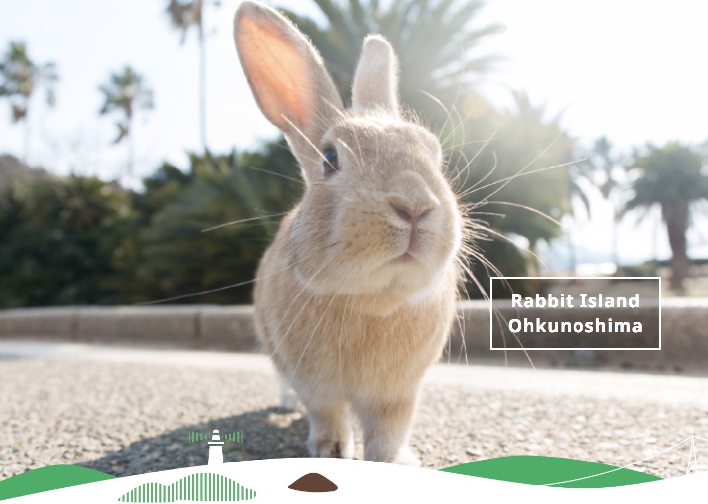 Rabbit Island Ohkunoshima Rabbit Island Ohkunoshima – What Is Ohkunoshima?
